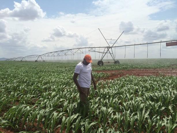 galana irrigation